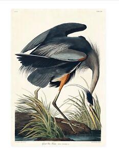 Vintage Great Blue Heron print, Audubon Print, Heron,  Quality Print A5 to A1