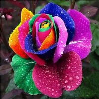 Multi-color 200Pcs/Bag Rainbow Rose Flower Seeds Garden Plants Seeds Flower