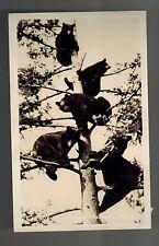 Bears Jasper Park Canada Vintage G. Morris Taylor RPPC Real Photo Postcard