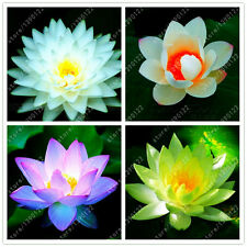 10PCS Lotus Flower Seeds Aquatic Plants Bowl Water Perennial Plant Home Garden