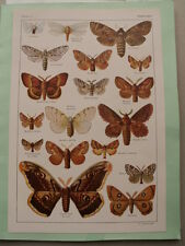 PLANCHE  ANCIENNE 1934 PAPILLONS INSECTES  ZOOLOGIE