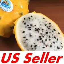 "25 Seeds Yellow Sweet Dragon Fruit E173, Var. ""Palora�, Pitaya Selenicereus M."