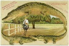 Alligator Border Florida Jacksonville Ad for Trunks 599 Bareback on Ostrich