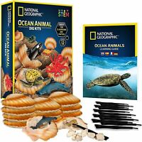 NATIONAL GEOGRAPHIC Ocean Animal Dig Kit 12 Seashell Sea Creature Learning Guide