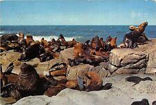 BG20807 punta del este isla de lobos seal uruguay