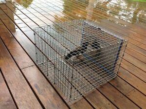 Myna Bird Trap (Indian Myna, Mynah)