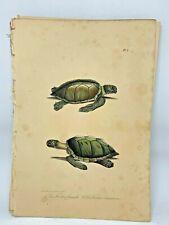 Original Antique Lacepede 1832 Hand Colored Plate 1 Sea Turtles