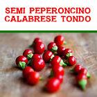 20 semi di peperoncino peppers Calabrese tondo
