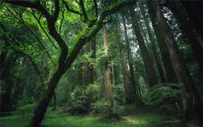 9X6ft senza cuciture Sfondo Sfondo poliestere PHOTO stufio prop alberi foresta pluviale