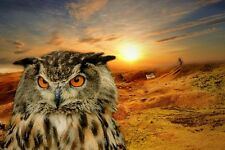 """perfact 36x24 oil painting handpainted on canvas """"An owl and landscape""""@N3236"""