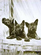 Diana Thorne SCOTTISH TERRIERS 1935 Dog Print Matted