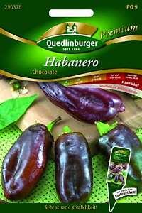Saatgut - Samen Habanero Chocolate 290378 Quedlinburger AR5460