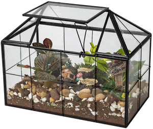 Ferrisland Glass Terrarium Flowers Case House Shape Display Box Planter for DIY