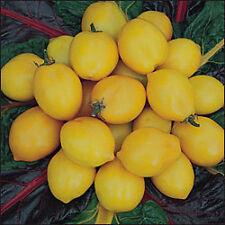 TOMATE LIMON (delicioso ) 55 Semillas Seeds