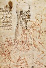 Human Head and Drawing of a Horseman  Leonardo da Vinci  Poster Print