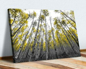 Black White Yellow Leaves Aspen Trees Canvas Wall Art Picture Print 30mm Deep