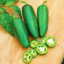 Jalapeno Chile Pepper Seeds Garden Bonsai Fruit Vegetable Plants Pepper 100Pcs
