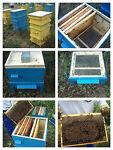 birnikov honey farm