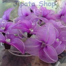 Purple Lily Nylon Party-Wedding-Decoration X-mas 110V Light String