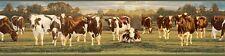 Ayrshire Marrone & Bianco e Facile Pareti Bordo Carta da Parati FFR65381B