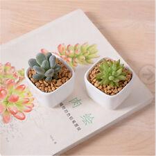 Mini White Ceramic Succulent Planter Flower Porcelain Pot Plant Box Garden Decor