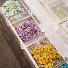 12 Colors High Quality Real Dried Flowers Nail Art Decoration DIY Tips 3016