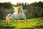 """White Stallion - Nature Poster (Running In The Wild) (Size: 36"""" x 24"""")"""