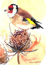 ACEO Limited Edition- Goldfinch on a teasel seed head