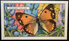 Clouded Yellow  Butterfly   Original  Vintage Colour Card  VGC