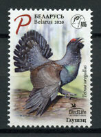 Belarus Birds on Stamps 2020 MNH Capercaillie Birdlife Inlt Bird of Year 1v Set