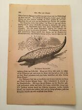 Kp18) Pangolins Pholidota in the Jungle Animal 1887 German Engraving 258