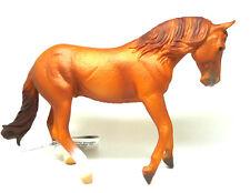 V3) COLLECTA (88712)  Australisches Stockhorse Hengst (Fuchs) Pferd Pferde