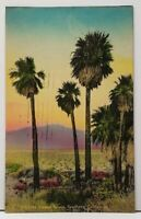 Southern California Southern Palms Hand Colored c1940 Postcard H4