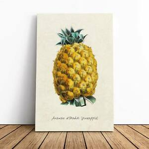 Illustration of a Pineapple Canvas Print Wall Art Picture Large Home Decor