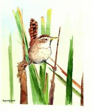 Marsh wren 5 x 7 inches Art print of an original watercolor painting by Anna Lee