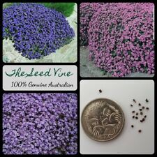 300+ AUBRETIA MIXED COLOUR SEEDS - Blue Pink Purple - Fast Flower Ground Cover