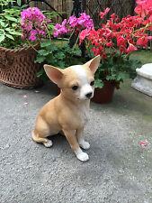Chihuahua , Dog small Chihuahua sandy