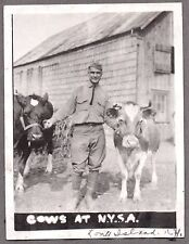 VINTAGE 1917-25 SIMMENTAL CATTLE COWS AT N.Y.S.A. LONG ISLAND NEW YORK OLD PHOTO