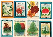 8 VINTAGE SEED PACKET LOT NOS C1910 FLOWERS GARDEN GENERAL STORE LARGER SIZE