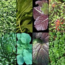 1000+ Asian Leafy Mix Seeds Autumn Micro-Greens Salad Heirloom Non-Gmo Tasty Usa