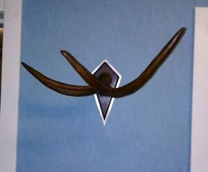 Natural Deer horn on the wall, clothes hanger