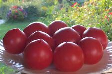 10 graines de tomate rare NASTEN'KA tolérance au froid tomato seeds méth.bio
