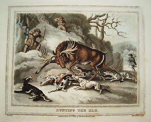 Elchjagd Hunting Moose Very Seltener Old Coloured Copperplate IN Aquatinta 1813