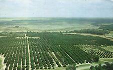 Aerial View  Silver Springs Orange Groves Postcard 1963 Florida
