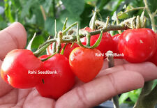 Tomato 'Berry' - A  Sweet, Dark-red, Strawberry-shaped Delicious Tomato Variety