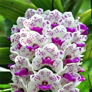 Cymbidium Orchid Seeds Silk Butterfly Orchid Artificial Flower UK STOCK