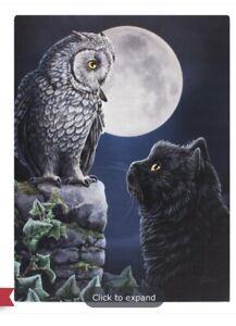 Purrfect Wisdom Canvas Plaque By Lisa Parker. Size 19x25cm