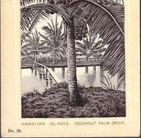 Hawaii Coconut 1890's Hawaiian Islands photo-style Dr Hartman Cure Ad Trade Card