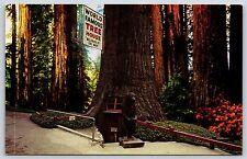 World Famous Tree House Tree House Park Laytonville, California Postcard Unused
