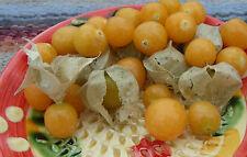 Pineapple Ground Cherry Seeds : Cape Gooseberry : Inca Berry